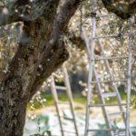 Perché diffidare di un olio extravergine d'oliva a buon mercato